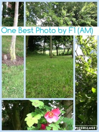 one-best-photo4